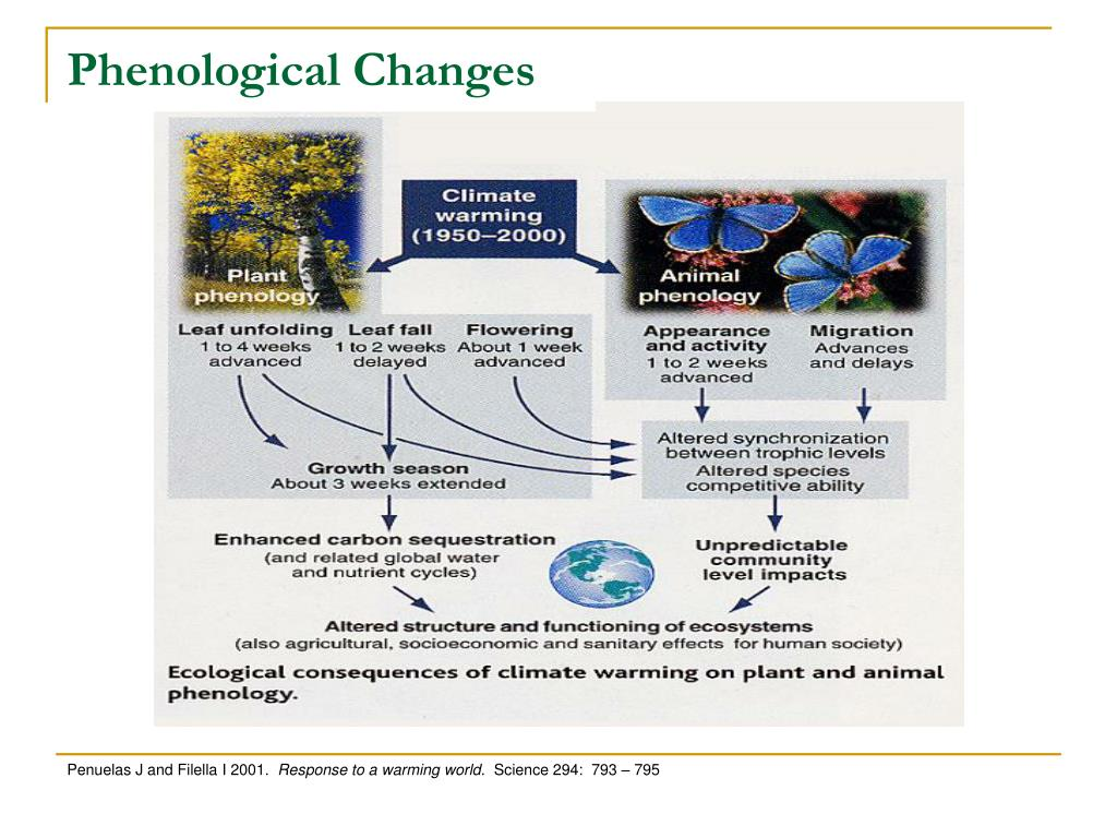 Phenological Changes