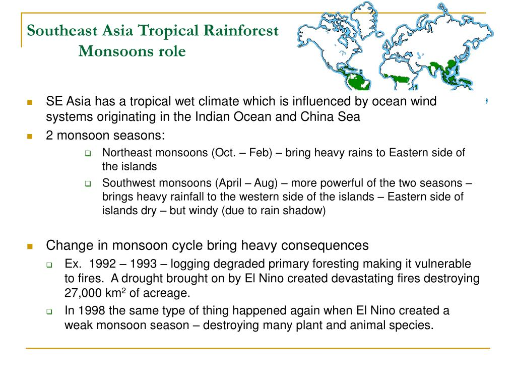 Southeast Asia Tropical Rainforest