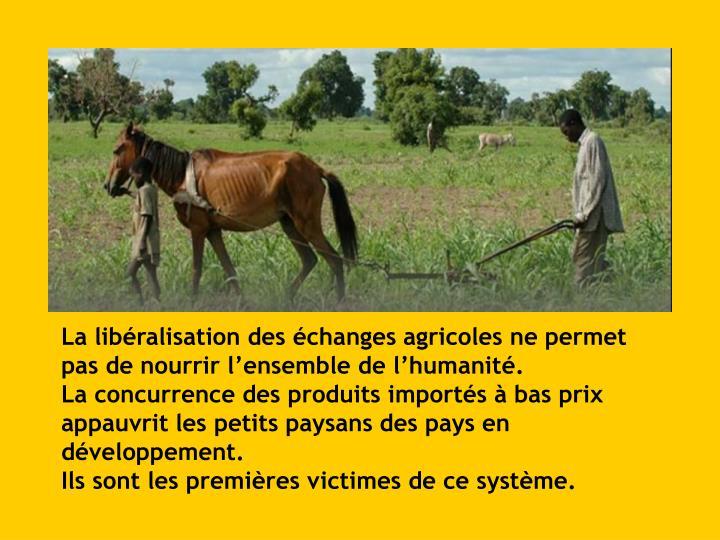 La libéralisation des échanges agricoles ne permet pas de nourrir l'ensemble de l'humanité.