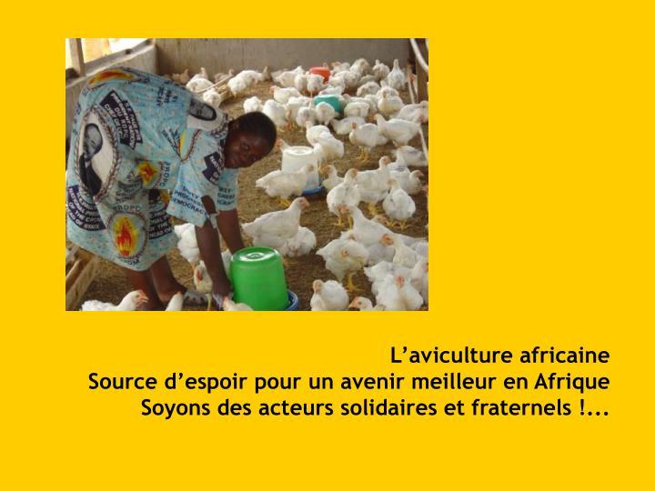 L'aviculture africaine