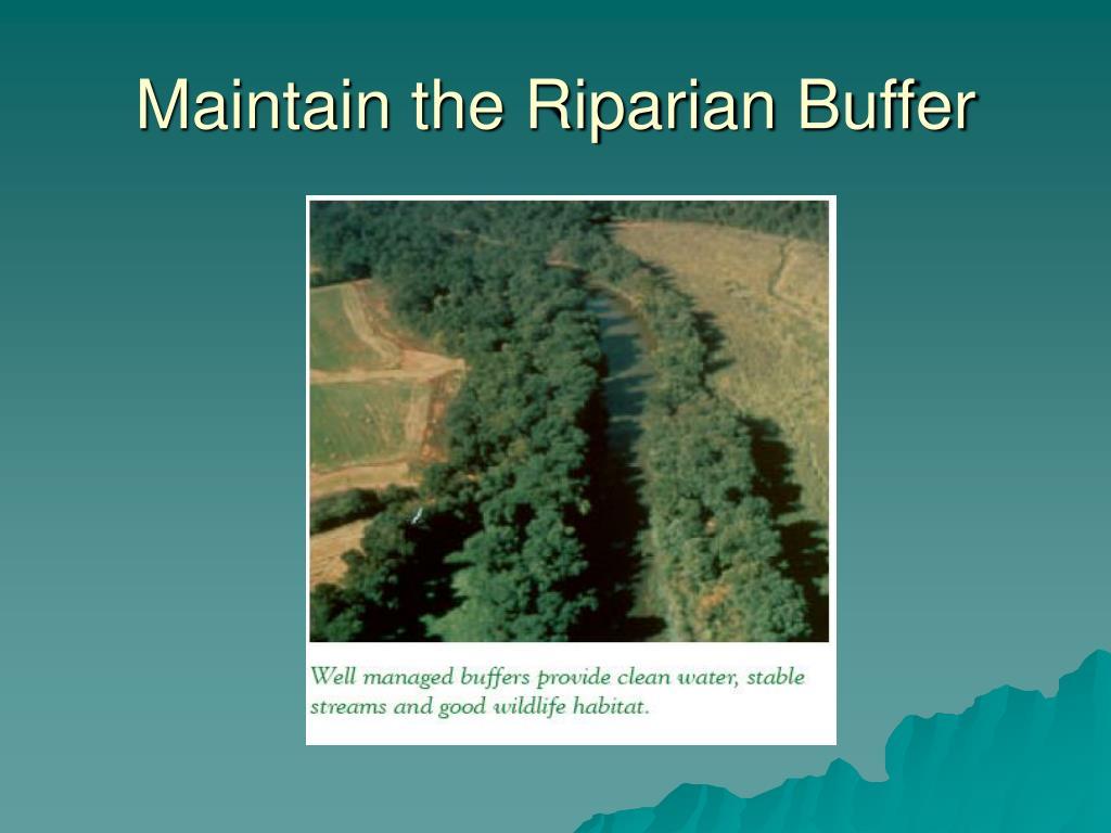 Maintain the Riparian Buffer