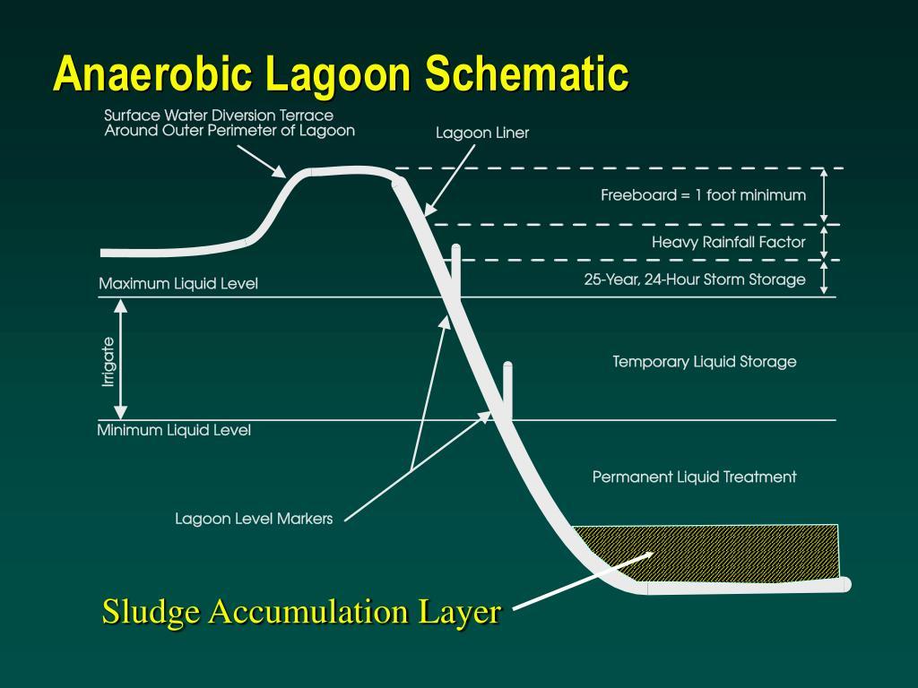 Sludge Accumulation Layer