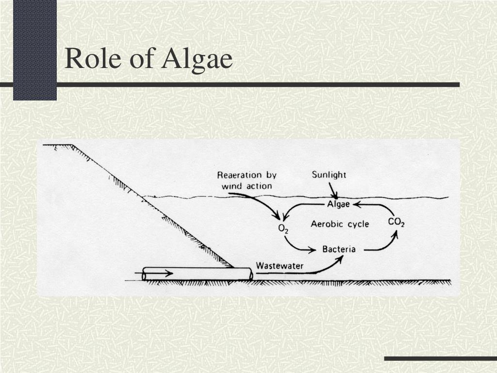 Role of Algae