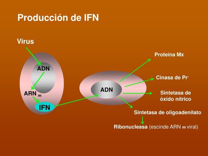 Producción de IFN