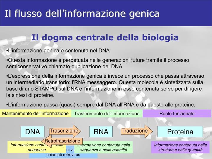 Il flusso dell'informazione genica
