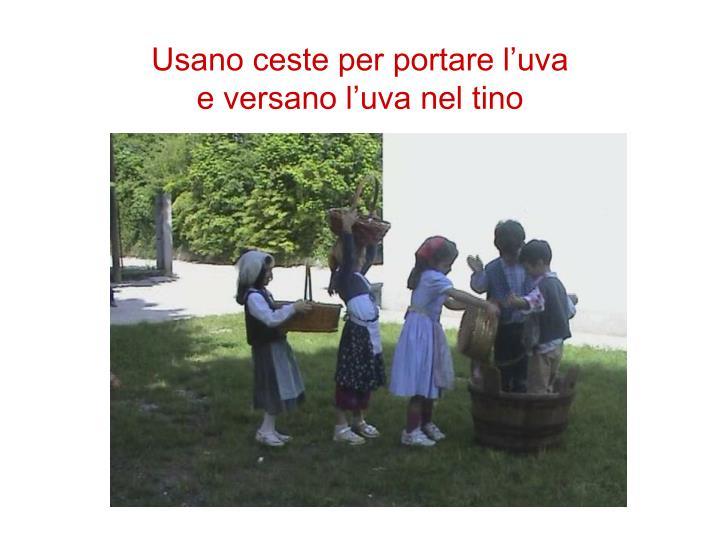 Usano ceste per portare l'uva