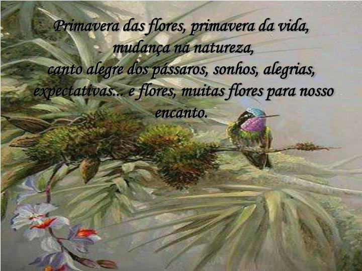 Primavera das flores, primavera da vida,