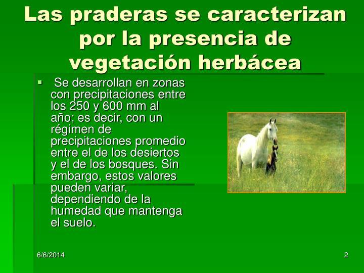Las praderas se caracterizan por la presencia de vegetación herbácea