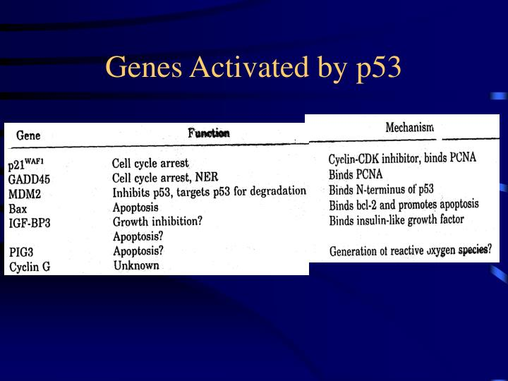 Genes Activated by p53