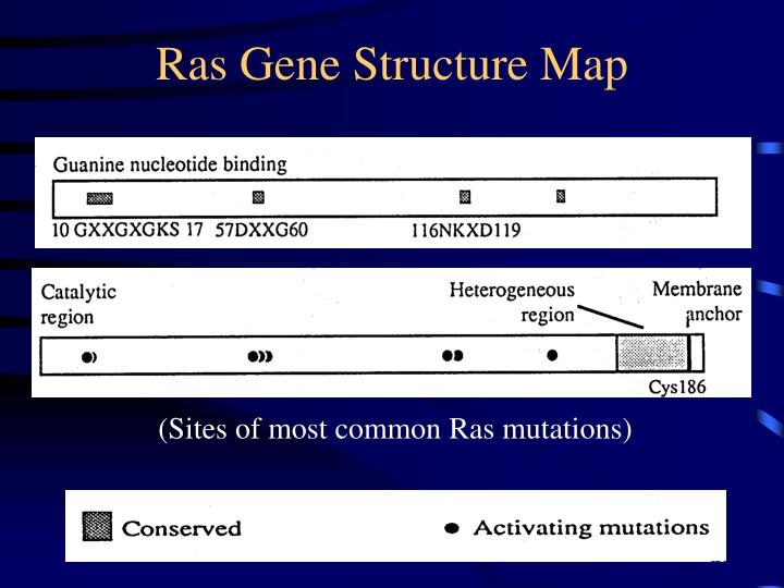 Ras Gene Structure Map