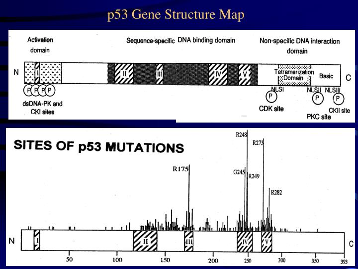 p53 Gene Structure Map