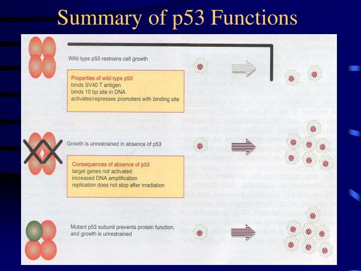 Summary of p53 Functions