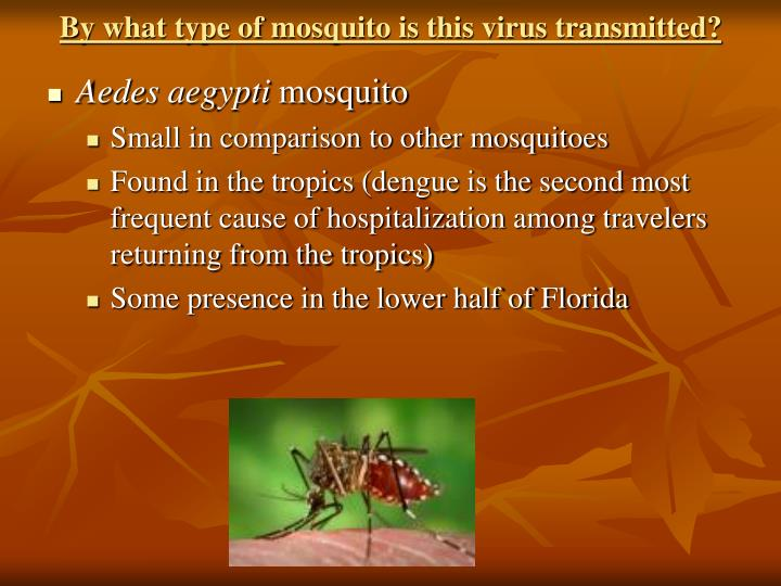 By what type of mosquito is this virus transmitted?