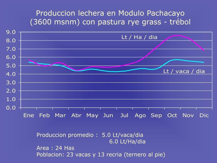 Produccion lechera en Modulo Pachacayo