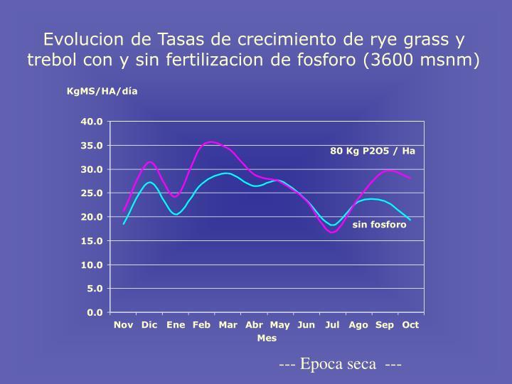 Evolucion de Tasas de crecimiento de rye grass y trebol con y sin fertilizacion de fosforo (3600 msnm)