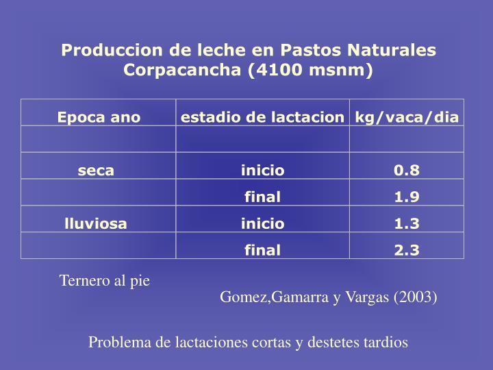 Produccion de leche en Pastos Naturales Corpacancha (4100 msnm)