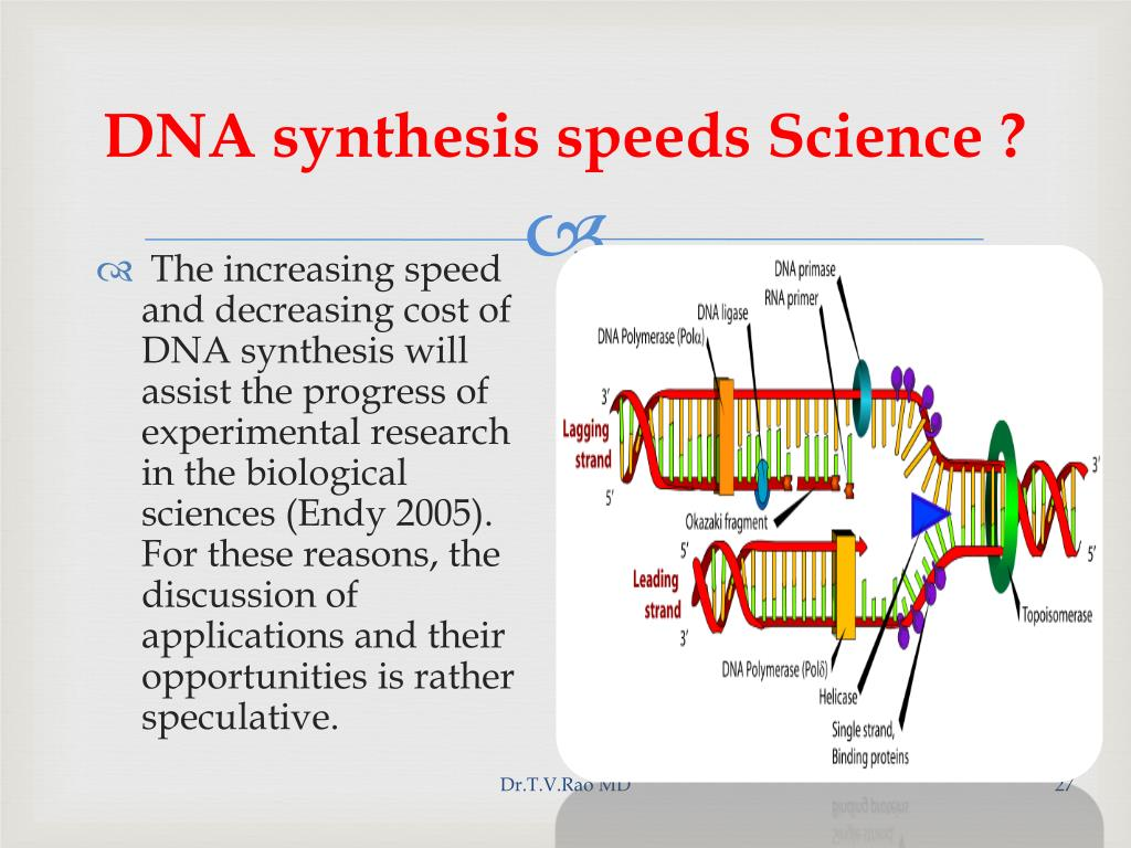 DNA synthesis speeds Science ?