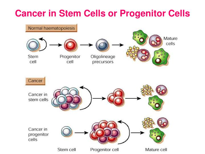 Cancer in Stem Cells or Progenitor Cells