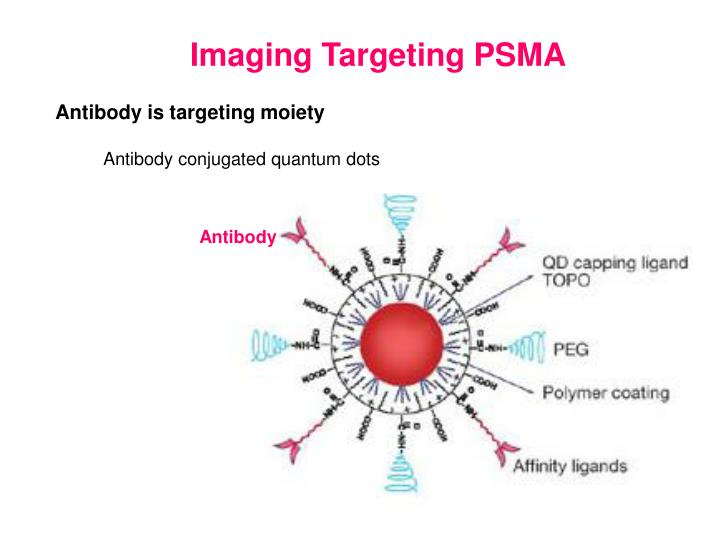 Imaging Targeting PSMA
