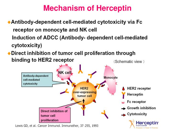 Mechanism of Herceptin