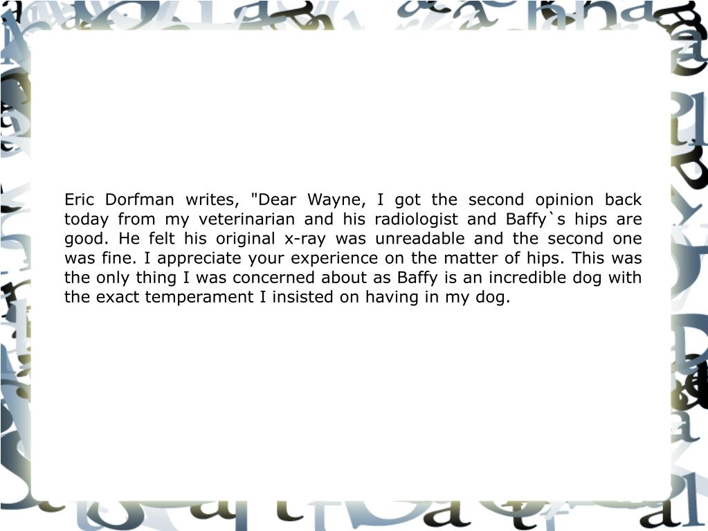 """Eric Dorfman writes, """"Dear Wayne, I got the second opinion back today from my veterinarian and his radiologist and Baffy`s hips are good. He felt his original x-ray was unreadable and the second one was fine. I appreciate your experience on the matter of hips. This was the only thing I was concerned about as Baffy is an incredible dog with the exact temperament I insisted on having in my dog."""