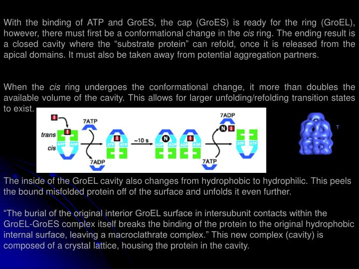 With the binding of ATP and GroES, the cap (GroES) is ready for the ring (GroEL), however, there must first be a conformational change in the