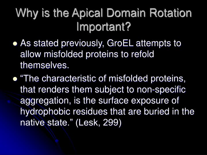 Why is the Apical Domain Rotation Important?