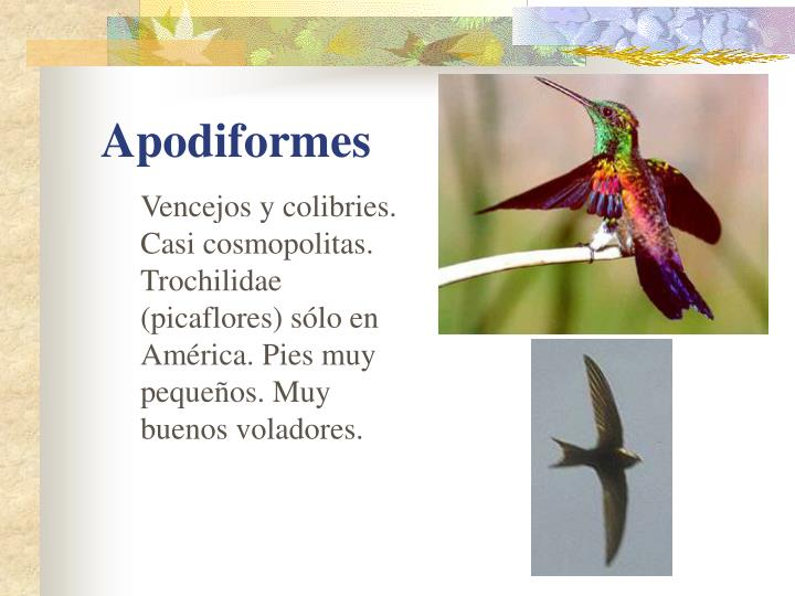 Vencejos y colibries. Casi cosmopolitas.