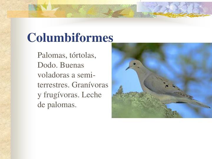 Palomas, tórtolas, Dodo. Buenas voladoras a semi-terrestres. Granívoras y frugívoras. Leche de palomas.