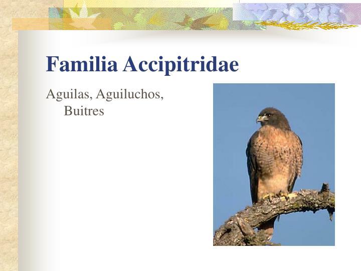 Aguilas, Aguiluchos, Buitres