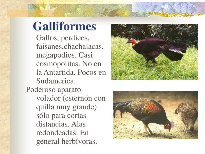 Gallos, perdices, faisanes,chachalacas, megapodios. Casi cosmopolitas. No en la Antartida. Pocos en Sudamerica.