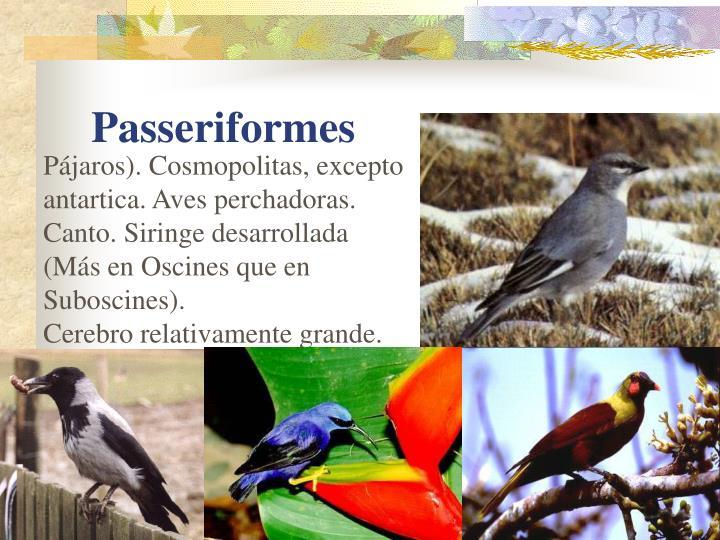 Pájaros). Cosmopolitas, excepto antartica. Aves perchadoras.