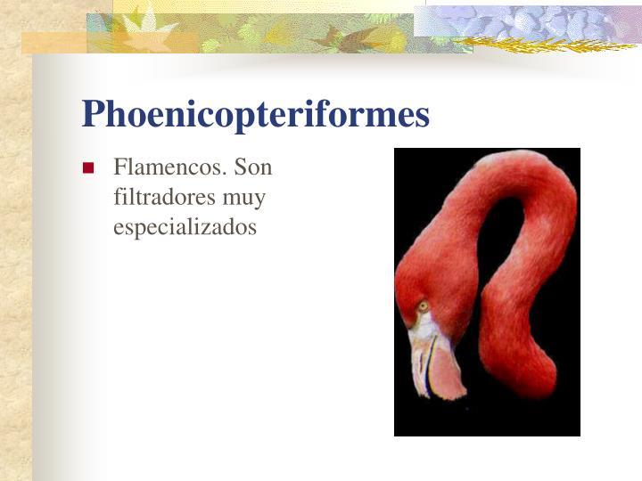 Flamencos. Son filtradores muy especializados