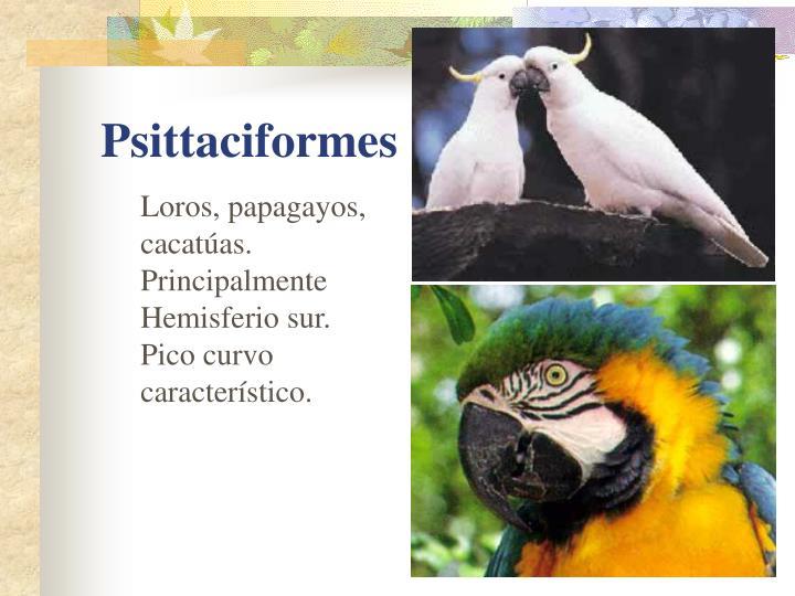 Loros, papagayos, cacatúas. Principalmente Hemisferio sur.