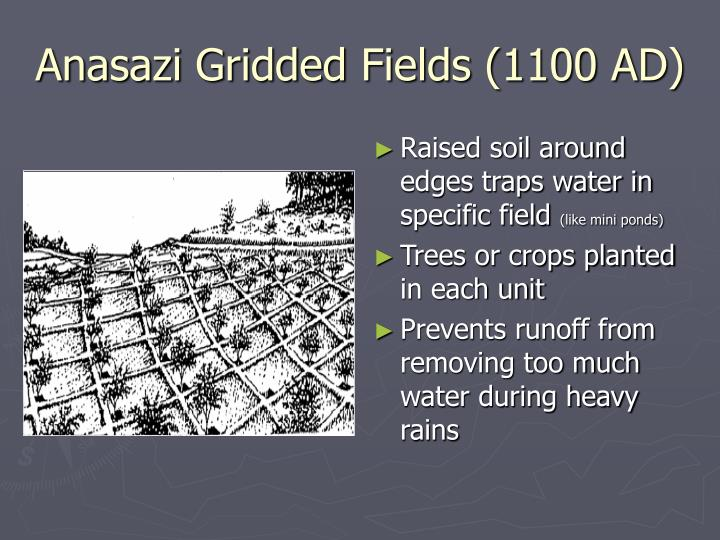 Anasazi Gridded Fields (1100 AD)