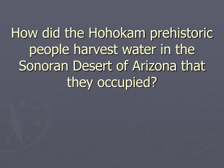 How did the Hohokam prehistoric people harvest water in the Sonoran Desert of Arizona that they occupied?