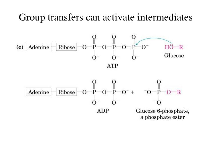 Group transfers can activate intermediates