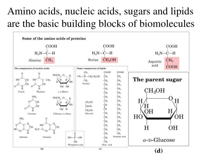 Amino acids, nucleic acids, sugars and lipids