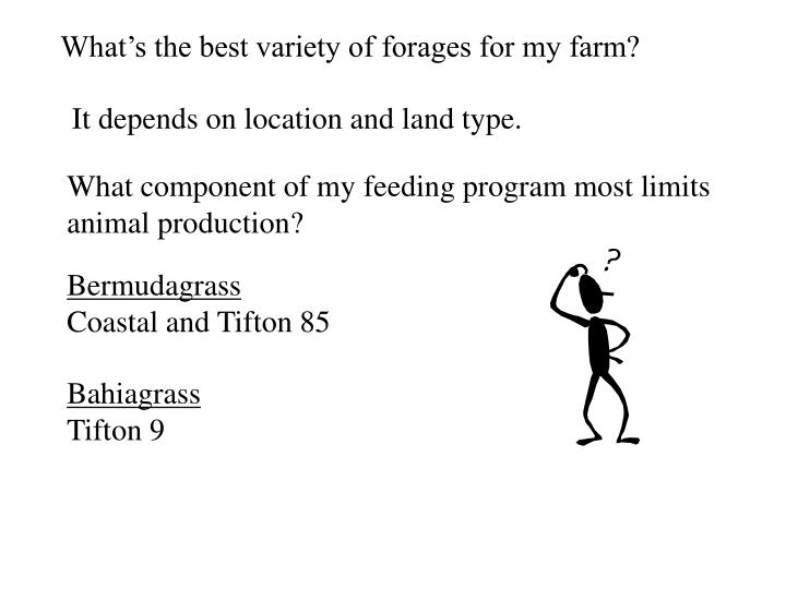 What's the best variety of forages for my farm?