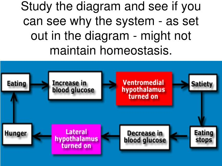Study the diagram and see if you can see why the system - as set out in the diagram - might not maintain homeostasis.