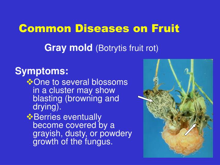 Common diseases on fruit