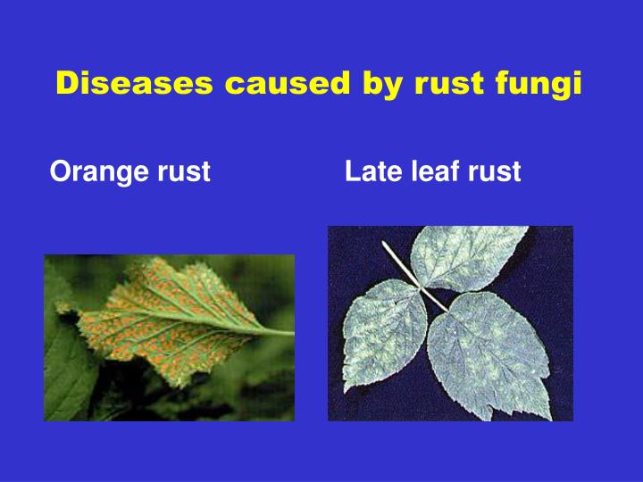 Diseases caused by rust fungi
