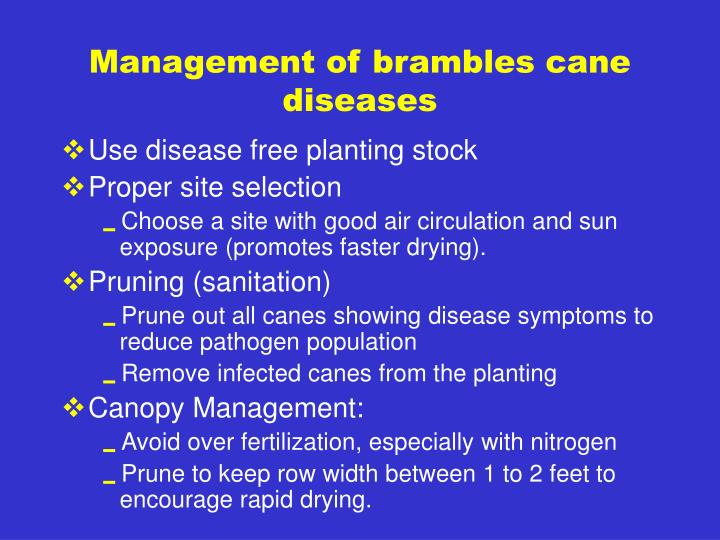 Management of brambles cane diseases