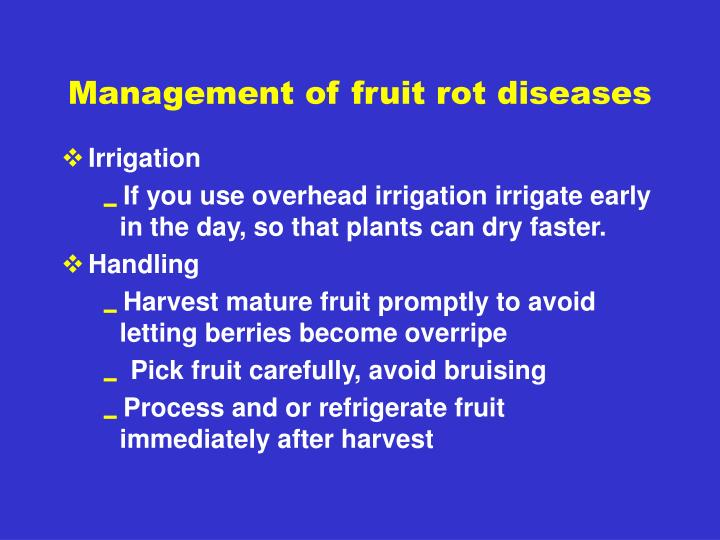 Management of fruit rot diseases