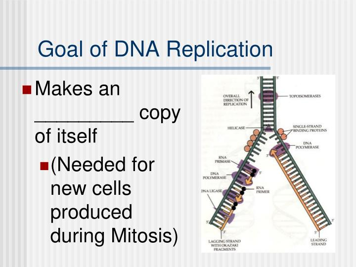 Goal of dna replication