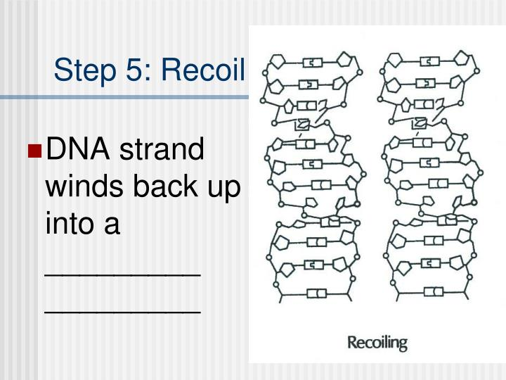 Step 5: Recoil