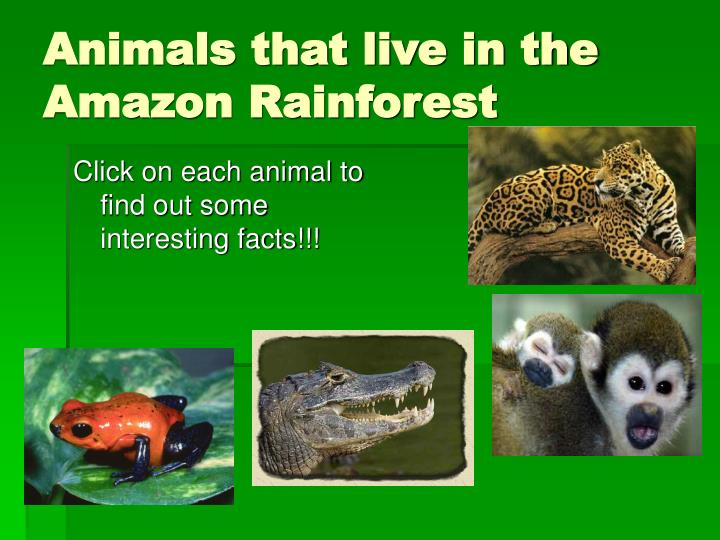 Animals that live in the Amazon Rainforest
