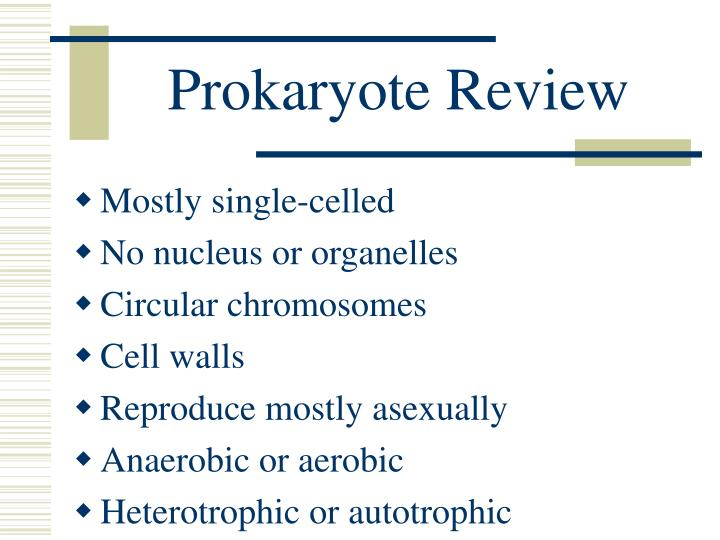 Prokaryote Review