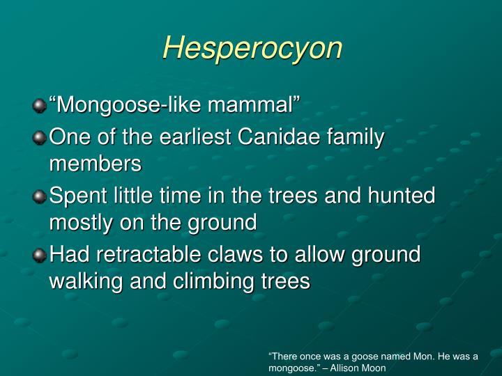 Hesperocyon