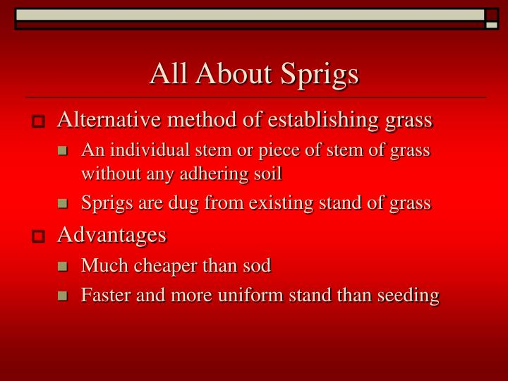 All About Sprigs